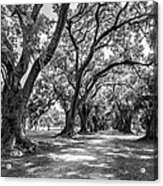 The Lane Bw Acrylic Print by Steve Harrington