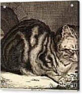 The Large Cat  Acrylic Print