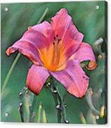 The Last Flower Acrylic Print