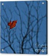 The Last Leaf Fell Acrylic Print