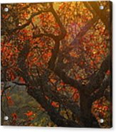 The Last Leaves On The Tree Acrylic Print by Rebecca Cearley