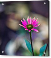 The Last Of Summer - Featured 3 Acrylic Print