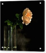 The Last Rose Of Summer Acrylic Print