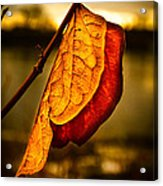 The Leaf Across The River Acrylic Print by Bob Orsillo