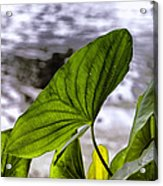 The Leaf Of A Water Plant Acrylic Print