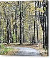 The Leaves Are Falling Acrylic Print