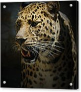 The Leopard Acrylic Print