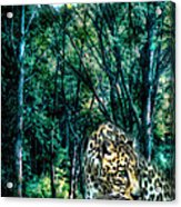 The Leopard Is Hungry Acrylic Print