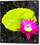 The Lily Pad And Flower... Acrylic Print