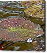The Lily Pad Acrylic Print