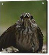 The Little Bird Acrylic Print