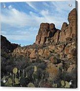 The Living Desert Of Arizona Acrylic Print