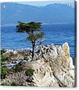 The Lone Cypress Acrylic Print