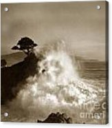 The Lone Cypress Midway Point Pebble Beach  Lewis Josselyn  Circa 1916  Acrylic Print