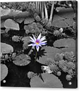 The Lone Flower Acrylic Print