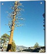 The Lone Tree Acrylic Print