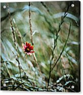 The Lonely Flower Acrylic Print