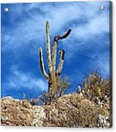 The Lonely Suguaro Acrylic Print