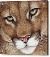 The Look Cougar Acrylic Print