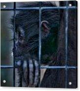 The Look Of Captivity Acrylic Print