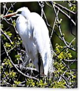 The Lookout Acrylic Print