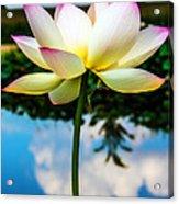 The Lotus Blossom Acrylic Print