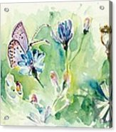 The Love Between Butterfly And Chicory Acrylic Print
