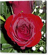 The Lovely Rose Acrylic Print