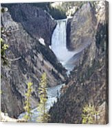 The Lower Falls Of Yellowstone River Acrylic Print