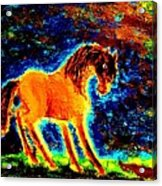 The Magic Horse Will Talk To You But Will You Understand  Acrylic Print