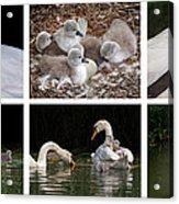 The Magic Of Spring Panorama Acrylic Print