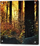 The Magic Of The Forest  Acrylic Print