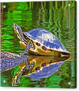 The Magnificence Of Turtle Acrylic Print