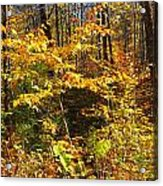 The Maine Woods Acrylic Print