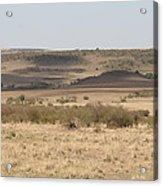 The Mara Plains Acrylic Print