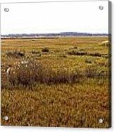 The Marsh At Cape Henlopen Acrylic Print