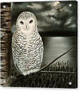 The Marsh At Night Acrylic Print