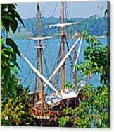 The Maryland Dove Acrylic Print