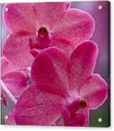 The Meaning Of Pink Acrylic Print
