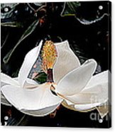 New Orleans Metamorphous Of The Southern Magnolia Spring Equinox In Louisiana Acrylic Print