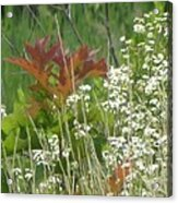 The Mighty Tiny Oak Amidst White Flowers Acrylic Print