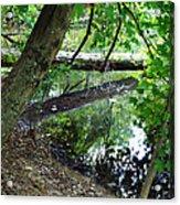 The Mirrored Tree Acrylic Print