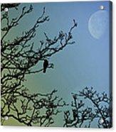 The Morning Moon Acrylic Print