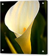 The Morning Trumpets Acrylic Print