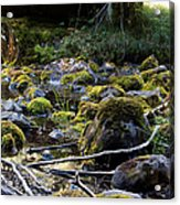 The Moss In The River Stones Acrylic Print