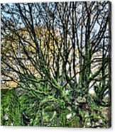The Mossy Creatures Of The  Old Beech Forest 8 Acrylic Print
