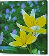 The Most Beautiful Flowers Acrylic Print