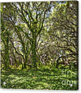 The Mysterious Forest - The Magical Trees Of The Los Osos Oak Reserve. Acrylic Print