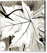 The Mysterious Leaf Abstract Bw Acrylic Print by Andee Design