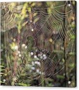 The Net Acrylic Print
